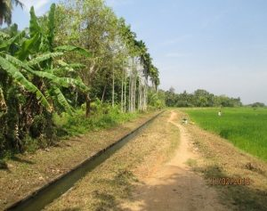 perennial canals irrigation system